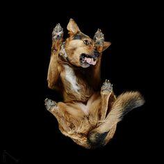 FOTO Fotografije pasa iz vrlo neobične perspektive će vas oduševiti! - Index ljubimci