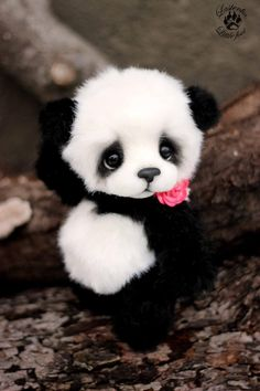 baby pandas You see your crush walking you direction, you tell your friends to act natural but you pop into the most random pose You see your crush walking you direction, y Cute Panda Baby, Baby Panda Bears, Baby Animals Super Cute, Cute Wild Animals, Baby Animals Pictures, Cute Baby Dogs, Cute Stuffed Animals, Cute Dogs And Puppies, Cute Little Animals