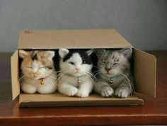 Guess I must've ordered another box of cats....