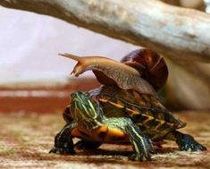 21 Nothing But Awesome Animal Pics