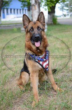 Stylish American Flag #Harness for #German #Shepherd #Breed $159.90 | www.all-about-german-shepherd-dog-breed.com