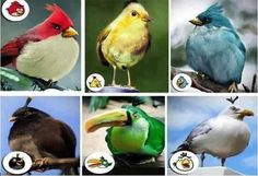 The real #AngryBirds they exist