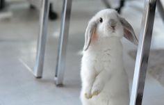 домашний белый кролик с черными ушами: 16 тыс изображений найдено в Яндекс.Картинках