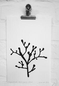 Print: Coral (Distichopea violacea) on handmade paper - Karamelo - Etsy