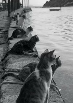 Cats Waiting for Fishermen to Return - Gatos esperando la llegada de los… I Love Cats, Crazy Cats, Cool Cats, Funny Cats, Funny Animals, Cute Animals, Smart Animals, Cats Humor, Cat Memes