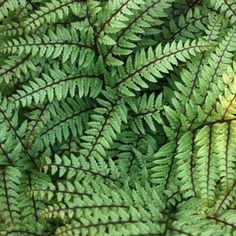 Find Cornish plants for every garden - Plant A-ZDuchy of Cornwall Nursery Garden Beds, Ferns, Shrubs, Planting Flowers, Plant Leaves, Bloom, Tropical, It's Easy, Cornwall