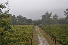 Exploring the Winelands between Stellenbosch and Franschhoek Exploring, Vineyard, Cape, Country Roads, Parenting, Travel, Outdoor, Mantle, Outdoors