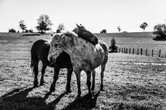 Calin de cheval by AnneCecile Graphic