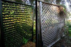 wandbegrünung vertikaler Garten am Zaun