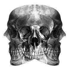 Skulls DIGITAL PRINT DAN HILLIER