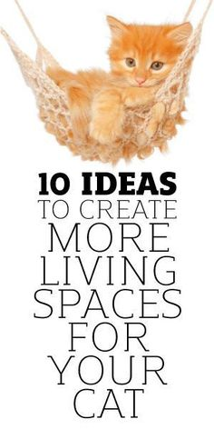 Cats Toys Ideas - 10 Ideas To Creating More Living Spaces For Your Cat because apparently sleeping on every available surface isnt enough lol - Ideal toys for small cats Diy Cat Toys, Dog Toys, Diy Jouet Pour Chat, Animals And Pets, Cute Animals, Cat Hacks, Cat Diys, Photo Chat, Cat Room