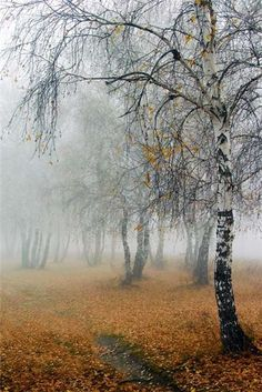 So pretty. I love the misty fall fog embracing the almost bare trees. and the ground is covered with autumn! Beautiful World, Beautiful Places, Beautiful Pictures, Bare Tree, Belle Photo, Mother Nature, Mists, Nature Photography, Scenery