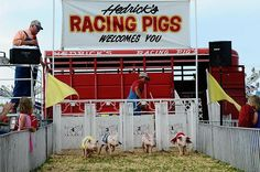 hedricks petting zoo - at the Wyandotte County Fair.  Kansas City, Kansas