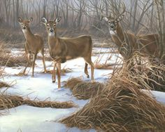 Wild Wings is one of today's leading publishers, distributors and retailers of wildlife art prints and nature-related home furnishings and decorating accessories, perfect for home and cabin decor. Deer Photos, Deer Pictures, Deer Pics, Wildlife Paintings, Wildlife Art, Deer Paintings, Original Paintings, Hunting Art, Deer Hunting