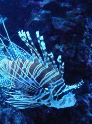 Les animaux marins à l'Aquarium Tropical- Citizenkid