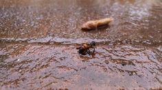 Bee vs Rain | por Bruno Riggs