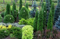 Gardening Tips – How To Garden and Landscape Hillside Garden, Garden Park, Lawn And Garden, Flower Landscape, Landscape Design, Garden Design, Trees And Shrubs, Trees To Plant, Colorado Landscaping