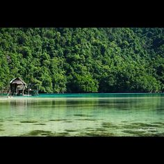 Bucas Grande Island, Surigao del Norte  (the jellyfish Lagoon, home to millions of no-sting, friendly and playful jellyfish )