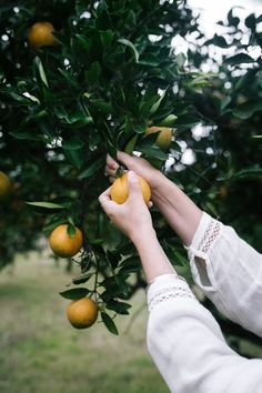 Find images and videos about vintage, aesthetic and nature on We Heart It - the app to get lost in what you love. Country Life, Country Living, Vegan For A Week, Farm Life, Hygge, Farming, Summertime, In This Moment, Green
