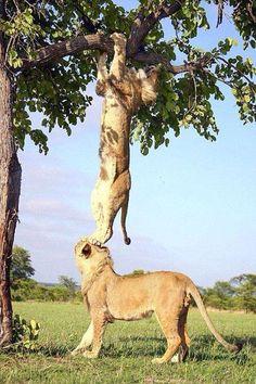 Team work, African Syle!