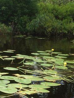 Nicks Lake #adk