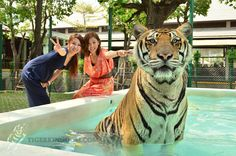 Gallery - Tiger Kingdom