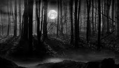 Image result for creepy campfire forest