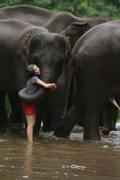 Having a bad day? How about a hug from an elephant? This would be such an enlightened experience and memory to have. Nothing calms the nerves like a hug! Animals And Pets, Baby Animals, Cute Animals, Baby Elephants, Wild Animals, Beautiful Creatures, Animals Beautiful, Elephas Maximus, Thailand Elephants