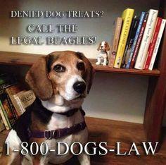 Princess P., Esq.  Beagle at Law