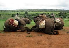 Kwantu Elephant Sanctuary is situated approximately 85km from Port Elizabeth along the N2 towards Grahamstown. It is part of Kwantu Private Game Reserve and offers majestical elephant interaction for R90, 45minutes and elephant riding  for R450