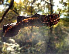 Autumn Leaf Photograph - nature photography - fine art photograph - Indian Summer