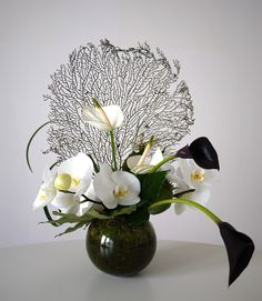 anturium - calla - orchidée - pavot