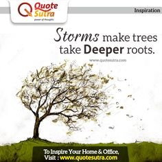 Storms make trees take Deeper Roots. All the problems you have ever faced have made you a stronger person. #inspiration #quote
