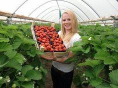 Het Aardbeienterras: kom zelf aardbeien plukken!