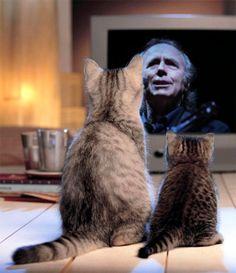 Dos gatitos y Serrat.