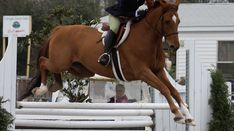 How To Stop A Horse From Speeding Up On The Landing Side Of The Jumps