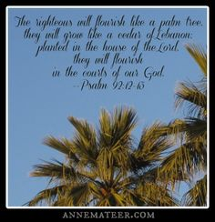 Psalm 92:12-13 (KJV) ~~ The righteous shall flourish like the palm tree: he shall grow like a cedar in Lebanon. Those that be planted in the house of the Lord shall flourish in the courts of our God.
