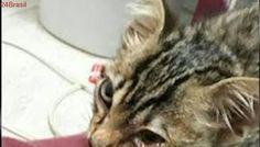 Gato encontrado à beira da morte precisa de ajuda em SP