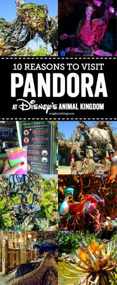 From floating mountains to flying banshees, discover 10 Reasons to #VisitPandora - The World of Avatar at Disney's Animal Kingdom!