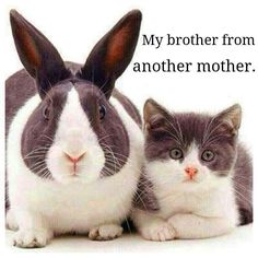 My brother from another mother! Bunny and kitty