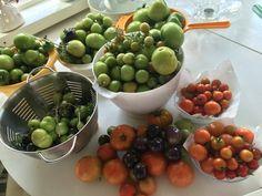 Oman puutarhan tomaatteja
