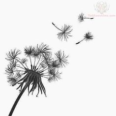 ... Draw Dandelion, Pyrography Pattern, Easy Drawing, Easy Doodles Drawing