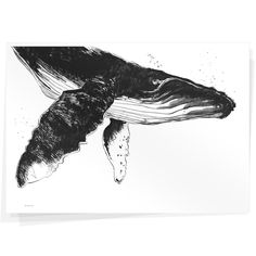 Whale by Wolfgang Philippi Whale Tattoos, Wall Candy, Poster Online, Drawing Exercises, Watercolor And Ink, Animal Drawings, Quilting Designs, Illustrations Posters, Sketches