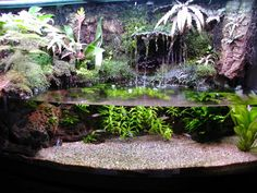http://www.plantedtank.net/forums/attachment.php?attachmentid=620&d=1102523474