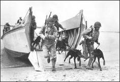 WWII Dobermans hit the beach!