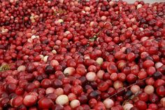 Cranberry - Wisconsin State Symbol