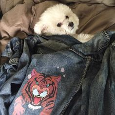 Did you know that there is a REAL LIFE JEAN JACKET? Just like the one from tonight's episode!!!It belongs to Eric Edelstein (the voice of Grizz!) and his dog, Liberace.