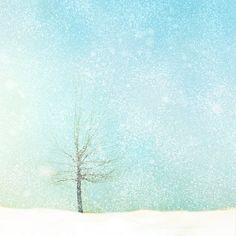 Photographie de la nature, neige, photo arbre, neige de l'hiver, arbre recouverte de neige, chutes de neige, forêt, neutres, baby blue, earthtones