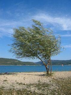 High wind - Sainte-Croix-de-Verdon, Provence-Alpes-Cote-dAzur