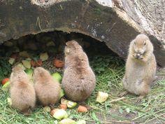 Uma pequena família :D. Bird, Animals, Salzburg, Pictures, Animales, Animaux, Birds, Animal, Animais
